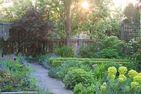 View across path to bed with Euphorbia, Myosotis - Forget-me-not and emerging foliage, with wooden fencing beyond