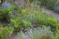 Informal raised beds with Myosotis - Forget-me-not - and a mixture of emerging perennials