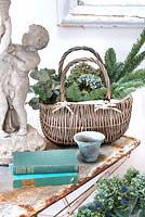 Wicker basket of harvested stems: Fir, Eucalyptus and Hydrangea flower heads,