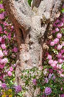 Pinus sylvestris trunk with Rhododendrons