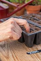 Woman using index finger to make holes in compost ready for sowing seeds