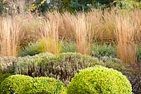 A terraced slope planted with lavender, Calamagrostis x acutiflora 'Overdam', catmint, rudbeckias and Calamagrostis x acutiflora 'Karl Foerster' at Barn House, Chepstow, UK.