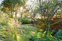 The orchard at the Barn House, Chepstow, UK.