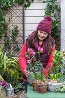 Woman placing pot with pink Helleborus on table  in early-spring courtyard setting.