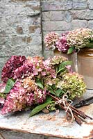 Bunch of mixed hydrangeas for arranging or drying