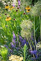 Mixed border with Allium, Helenium and Veronica