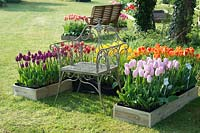 Tulipa display surrounding bench at 'Brighter Blooms' Nursery, Preston, Lancashire