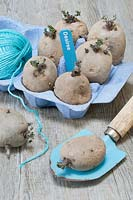 A blue eggbox of chitting seed potatoes, labelled 'Desiree', with a trowel and a ball of twine.