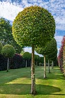 Formal Topiary Walk at Town Place in Sussex, UK.