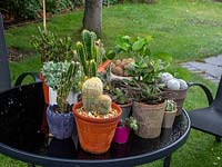 Put houseplants - cacti and succulents outside on rainy day.  Houseplant maintenance, care and watering.