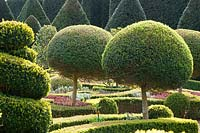View of topiarised clipped standards  and sprials in Knot garden, Abbey House Gardens, Malmesbury, UK.