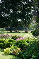 Clipped Box balls and flowering Alliums in border, with view to group of alpaccas resting on lawn.