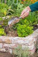 Woman adding a gravel mulch to herb garden using a scoop.