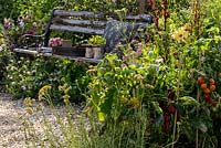 Tomatoes and peppers growing by a wooden garden bench in the  wildlife friendly BBC Springwatch Garden, RHS Feature Garden, RHS Hampton Court Palace Garden Festival, 2019.