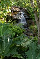 A view over the Gunnera manicata to the waterfall in the RHS Back to Nature Garden.  Acer pseudoplatanus, and ferns - Blechnum spicant and Asplenium scolopendrium. Designer: HRH The Duchess of Cambridge with Andrée Davies and Adam White. 2019 RHS Hampton Court Flower Show