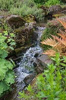 Alchemilla mollis - Lady's mantle and Dryopteris erythrosora 'Brilliance' - Copper shield fern 'Brilliance' growing by natural waterfall in pond.