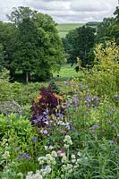 Overlooking the River Tweed through the border on the main lawn. Surrounding planting includes Aquilegia - columbine, granny's bonnet, Cotinus coggygria -smokebush and Centranthus ruber 'Albus' - red valerian