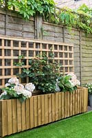 Raised bed with wooden trellis backing planted with Hydrangeas and Rose