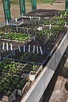 Greenhouse with young salad seedlings at Montague Organic Garden, Somerset, owned by Charles Dowding