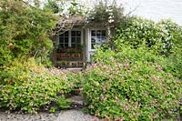 Wooden shelter surrounded with Clematis montana, Geranium macrorrhizum 'Ingwersen's Variety', Fuchsia and Choisya.