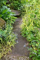 Stone path edged with Milium effusum 'Aureum' - Bowles's Golden Grass, Symphytum and Hosta.