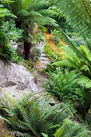 Large granite outcrops are surrounded by lush ferns including Dicksonia antartic - Tree ferns.