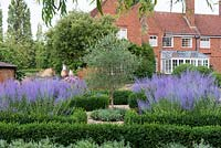 A formal box parterre, an olive tree at the centre, and each bed filled with Perovskia atriplicifolia, blue Russian sage, and drumstick alliums.  Behind, 1937 house.