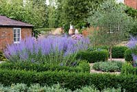 A formal box parterre, an olive tree at the centre, and each bed filled with Perovskia atriplicifolia, blue Russian sage, and drumstick alliums.