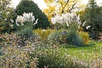 Autumn borders with clumps of pampas grass, Cortaderia selloana, amidst swathes of dogwoods, turning gold.