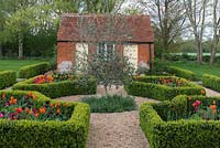 Laid out between old brick outbuildings, a box parterre with gravel paths separating  beds planted with Tulipa 'Paul Scherer', 'Ballerina' and 'Doll's Minuet', an olive tree in the centre