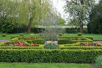 Overlooking meadows, a box parterre with gravel paths separating  beds planted with tulips 'Paul Scherer', 'Ballerina' and 'Doll's Minuet.' In the centre, an olive tree.