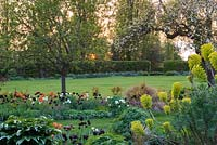 The sun sets behind apple blossom, and an island bed of grasses, euphorbia, dogwoods and Tulipa - Tulips 'Paul Scherer', 'Ballerina', 'Abu Hassan' and 'White Dream'.