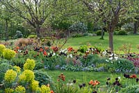 An island bed of grasses, grape hyacinths, Euphorbia, Dogwoods and Tulipa 'Paul Scherer', 'Ballerina', 'Abu Hassan' and 'White Dream'