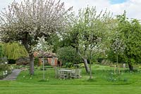 An old  Bramley apple tree blossoms above a seating area on the lawn where narcissi are naturalised in the grass.