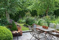 A small paved courtyard with dining table and chairs, next to a tall hornbeam hedge and silver birches - Betula utilis var. jacquemontii.