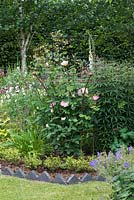 Rosa 'Gentle Hermione', contained by a rusted iron support in a bed with Aquilegias, hardy Geraniums, foxgloves, Astrantias and Mallow.