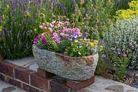 Stone alpine trough planted with flowering Dianthus  'Dixie Red Rose Bicolour' and 'Shooting Star', Armeria 'Nifty Thrifty', Sedum 'Cape Blanco', Lewisia cotyledon 'Elise', Pritzelago 'Crystal Carpet', and Viola 'Rebecca'.