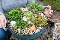 Vintage copper bowl ready planted with succulent plants — Sedum 'Blue Cushion', Delosperma cooperi, mixed Sempervivum, and Saxifraga cuneifolia 'Variegata'. A top layer of gravel and sea shells protects the foliage from damp soil.