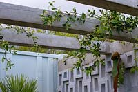 Trachelospermum jasminoides trained over a pergola - Defiance - Green Living Spaces, RHS Malvern Spring Festival 2019