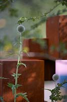 The Lower Barn Farm Outdoor Living Garden. Detail of Echinops ritro in front of 'Honesty' sculpture made from Corten steel by Jill Clarke.