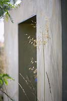 Stipa gigantea seedheads against bare concrete wall with open doorway.