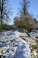 Beds full of trees, shrubs and  perennials including Cercidiphyllum japonicum - Katsura Tree, Berberis thunbergii, Bearded Iris, Hardy Geraniums, ornamental grasses, Astas and Euonymus fortunei, snow in January.