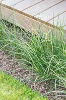 Ornamental grass by edge of decking.