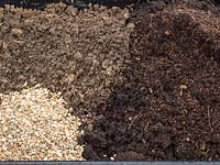 Planting bare rooted rose into pot - step by step.  Rosa Dusky Maiden - Tea and old hybrid tea rose - Mix of compost, grit and loam soil.