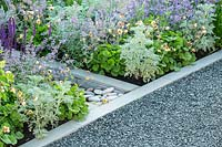 Use of stone in the garden - a grey gravel path is neatly edged with a contemporary style white stonework and pebbles, with blue and silver plants. RHS Hampton Court Palace Garden Festival 2019. Sponsor: Viking Cruises