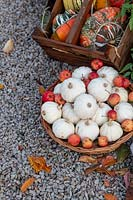 Cucurbita pepo - Casperita squash, crab apples and Turks turban squash display at RHS Wisley gardens