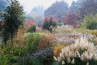 View across large mixed bed includes: Cortaderia, Miscanthus, Asters, Calamagrostis, Helianthus 'Lemon Queen', Euonymus and Ilex - Holly