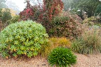 Gravel garden with Euphorbia, Stipa gigantea, Abelia and Euonymus europaeus 'Red Cascade'