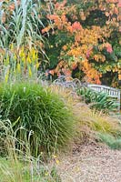 Upright Solidago californica with Pennisetum, Agapanthus, Arundo donax, Aster and Parrotia persica - Persian Ironwood, surrounding a bench