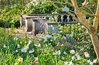 Flower bed under a tree, plants include: Pulmonaria angustifolia - Lungwort, Tulipa, Primula veris - Cowslip and Narcissus - Daffodil